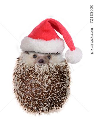 Cute hedgehog wearing red santa claus hat acting look like ball. 72185030