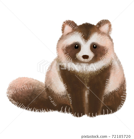 Raccoon 72185720