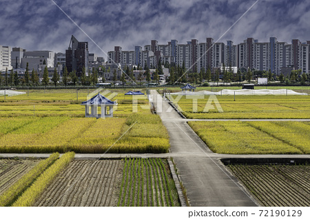稻田 72190129
