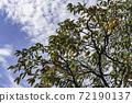감나무 72190137