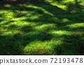 閃著光芒的苔蘚林地(滋賀縣比叡山) 72193478