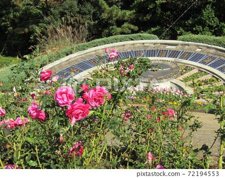 해시계의 앞에 화단에 분홍색의 예쁜 장미 꽃 72194553