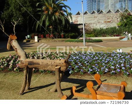 삼양 메데아 꽃 박물관 앞마당 파란 꽃 비올라 72196730
