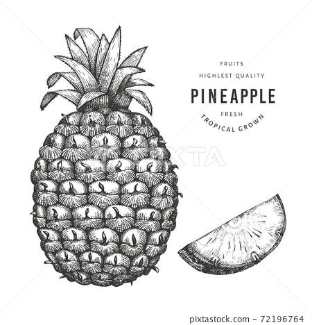 Hand drawn sketch style pineapple. Organic fresh food vector illustration isolated on white background. Retro fruit illustration. Engraved style botanical picture. 72196764