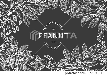 Hand drawn peanut branch and kernels design template. Organic food vector illustration on chalk board. Retro nut illustration. Engraved style botanical picture. 72196818
