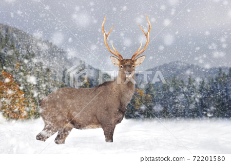 Deer on a winter landscape background with snowfalls 72201580