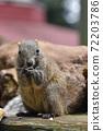 泰國一隻松鼠吃葵花籽2 72203786
