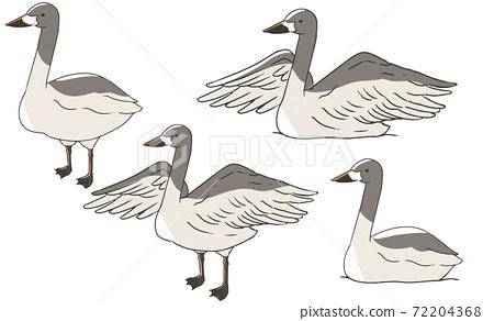 燕子天鵝幼鳥 72204368