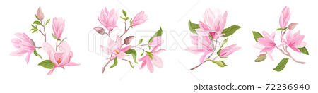 Magnolia flowers bouquet set. Floral spring template of blossom, leaves, branches. Design pastel elements 72236940
