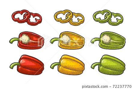 Sweet bell pepper. Vector vintage engraved illustration 72237770