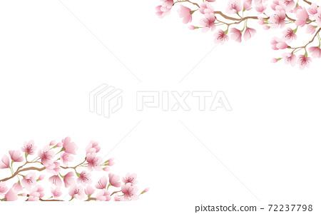 盛開的櫻花花瓣粉紅色的天空背景素材圖 72237798
