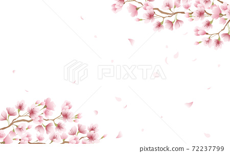Cherry blossom petals in full bloom pink sky background material illustration 72237799