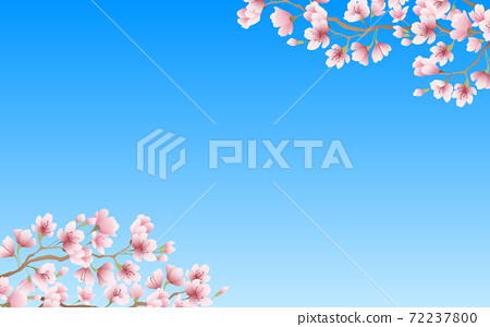 Cherry blossom petals in full bloom pink sky background material illustration 72237800