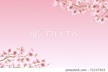 Cherry blossom petals in full bloom pink sky background material illustration 72237803