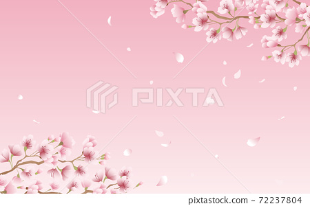 Cherry blossom petals in full bloom pink sky background material illustration 72237804