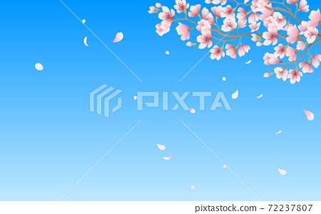Cherry blossom petals in full bloom pink sky background material illustration 72237807