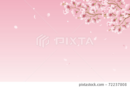 Cherry blossom petals in full bloom pink sky background material illustration 72237808