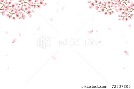 Cherry blossom petals in full bloom pink sky background material illustration 72237809