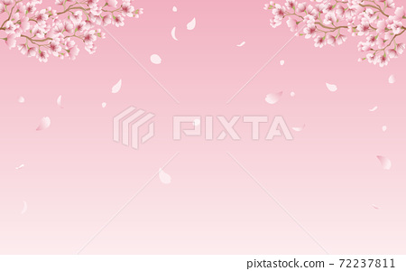 Cherry blossom petals in full bloom pink sky background material illustration 72237811