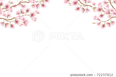Cherry blossom petals in full bloom pink sky background material illustration 72237812
