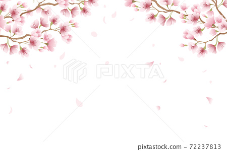 Cherry blossom petals in full bloom pink sky background material illustration 72237813