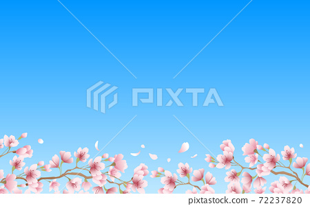 Cherry blossom petals in full bloom pink sky background material illustration 72237820