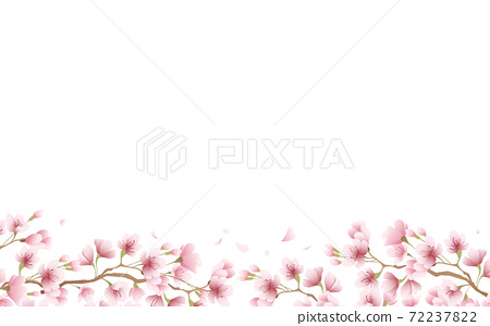 Cherry blossom petals in full bloom pink sky background material illustration 72237822