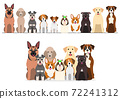 狗一排組前排 72241312
