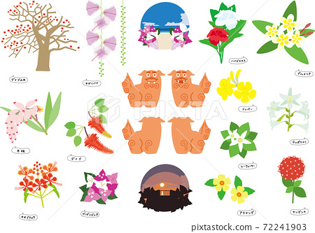 Fascinating flowers and cute shisa that color Okinawa 72241903