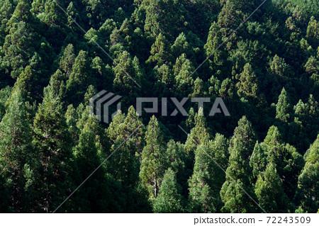 Kii山世界遺產森林 72243509