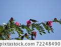 Bird on tree of Pink flower Powder Puff 72248490