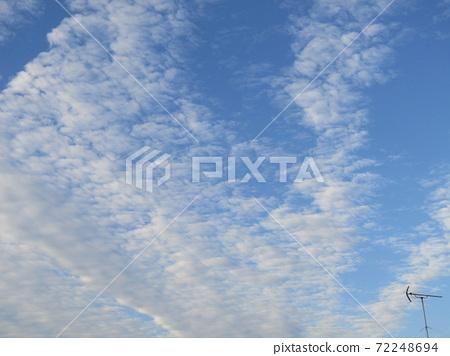 코지마 꽃의 모임 꽃밭의 겨울 푸른 하늘과 흰 구름 72248694