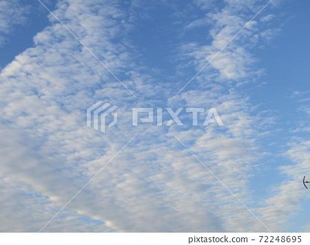 코지마 꽃의 모임 꽃밭의 겨울 푸른 하늘과 흰 구름 72248695