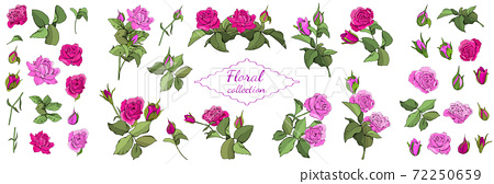 Set of roses and leaves isolated on white background. 72250659