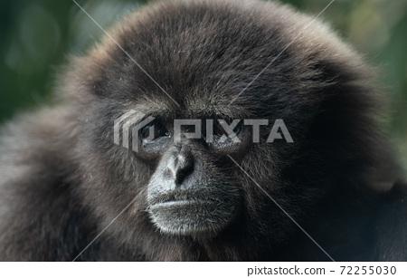 美麗的猴子 72255030