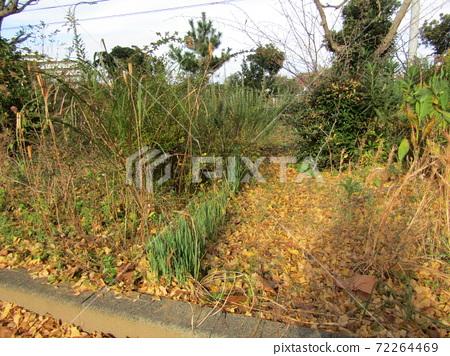 단풍의 公孫樹의 낙엽에 묻힌 섬 공원 72264469