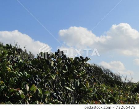 検見川 바닷가 가을의 푸른 하늘과 흰 구름 72265478