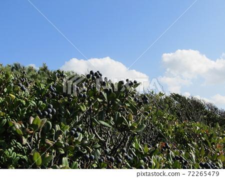 検見川 바닷가 가을의 푸른 하늘과 흰 구름 72265479