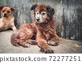 Lonely stray dog lying on the floor in shelter, suffering hungry miserable life, homelessness. Shelter for animals concept 72277251
