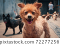 Portrait of mixed breed dog in shelter waiting to be rescued and adopted to new home. Shelter for animals concept 72277256