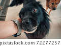 Close-up of male hand petting stray dog in pet shelter. People, Animals, Volunteering And Helping Concept. 72277257