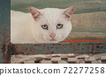 Cat pound. Close-up shot of homeless stray cat living in the animal shelter. Shelter for animals concept 72277258