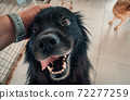Close-up of male hand petting stray dog in pet shelter. People, Animals, Volunteering And Helping Concept. 72277259