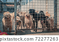 Unwanted and homeless dogs of different breeds in animal shelter. Looking and waiting for people to come adopt. Shelter for animals concept 72277263
