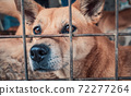 Portrait of sad dog in shelter behind fence waiting to be rescued and adopted to new home. Shelter for animals concept 72277264