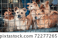Unwanted and homeless dogs of different breeds in animal shelter. Looking and waiting for people to come adopt. Shelter for animals concept 72277265