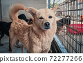 Sad dog in shelter waiting to be rescued and adopted to new home. Shelter for animals concept 72277266