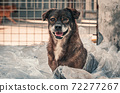 Portrait of sad dog in shelter waiting to be rescued and adopted to new home. Shelter for animals concept 72277267