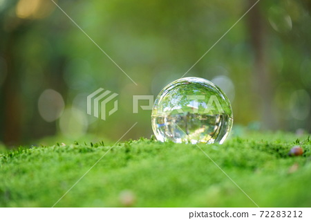 이끼 정원의 렌즈 공 1 72283212