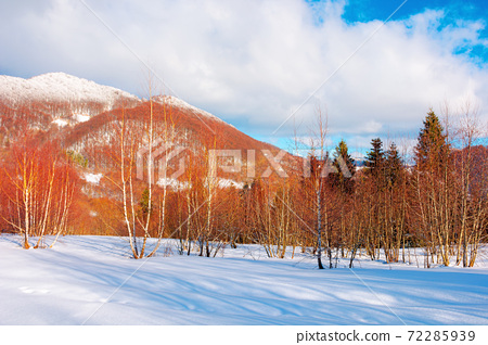 winter landscape in afternoon light. beautiful nature scenery in mountains. leafless trees on a snow covered slope. wonderful sunny weather with clouds on the sky 72285939